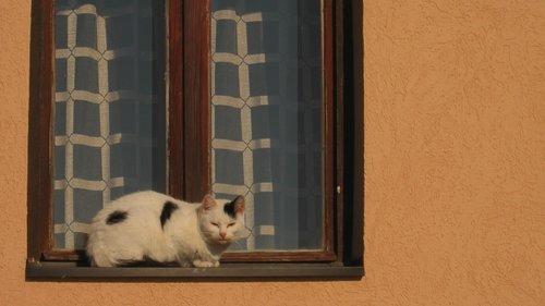 NikolaRadojicic Maca