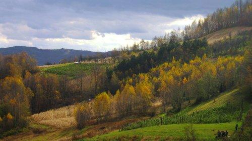 NikolaRadojicic Jesen