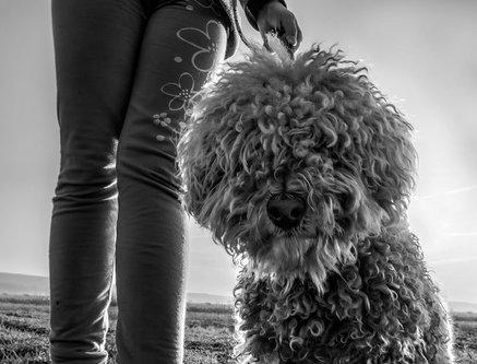 NovicaStankovic moj pas