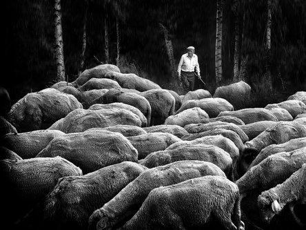 NovicaStankovic Pastir