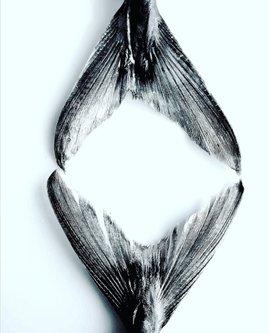 Ogimaster FISH ART