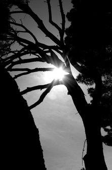 Ogimaster Kroz grane sunce