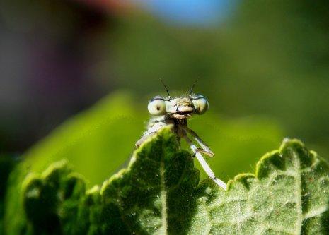 OljaSimovic oči