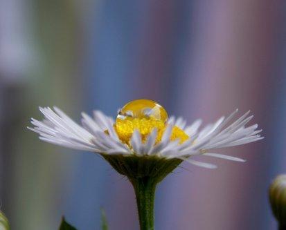 OljaSimovic cvet i kap