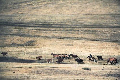 Oroku Konji