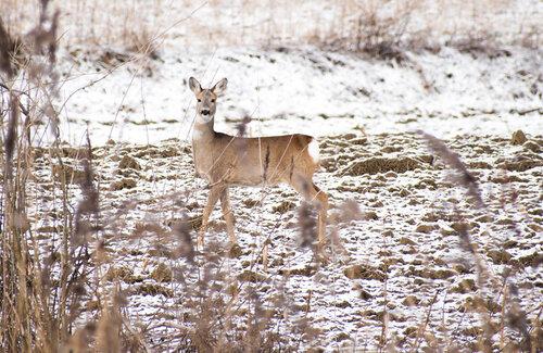 Pukylly Oh Deer