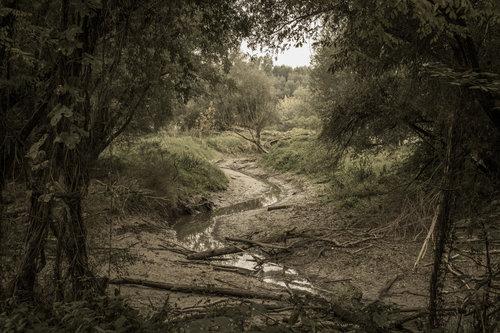 Pukylly Rukavac rijeke Drave