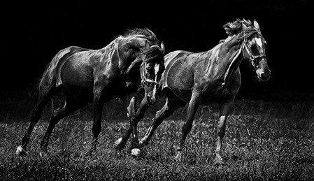 RadeLukovic Rade Lukovic Horse no.6,