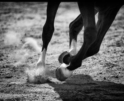 RadeLukovic Rade Lukovic Horse no.7