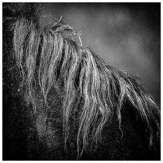 RadeLukovic Rade lukovic  Horse no.1