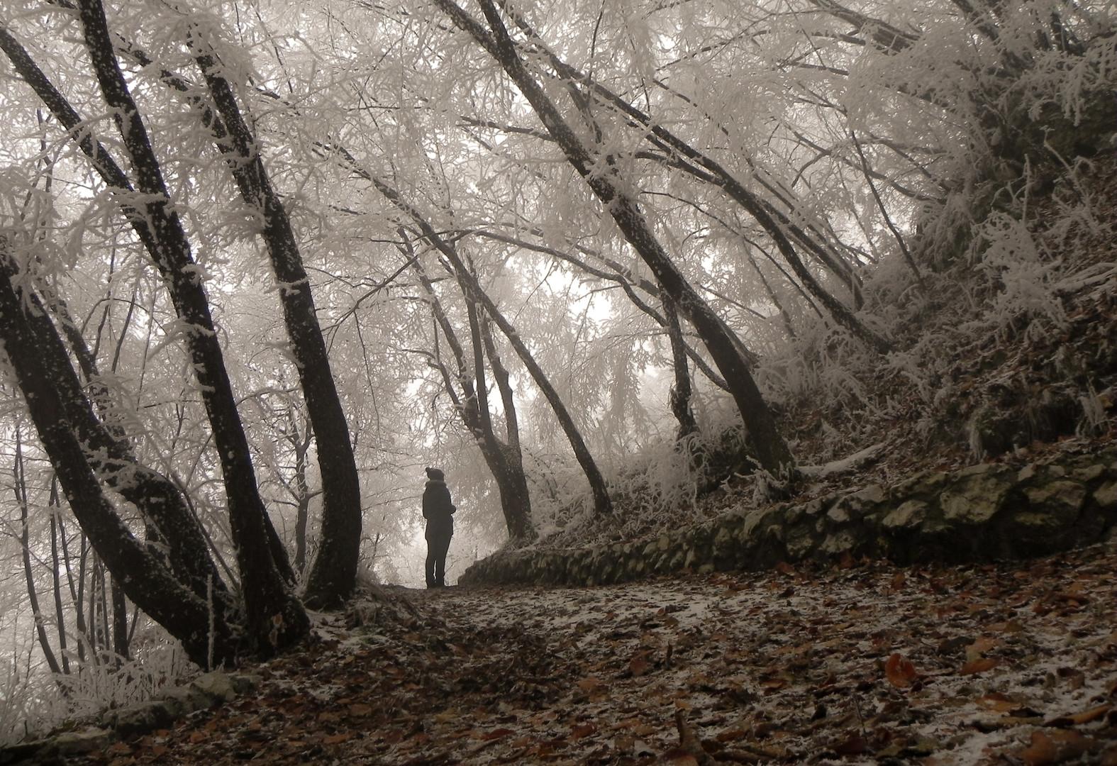 Šuma sjećanja
