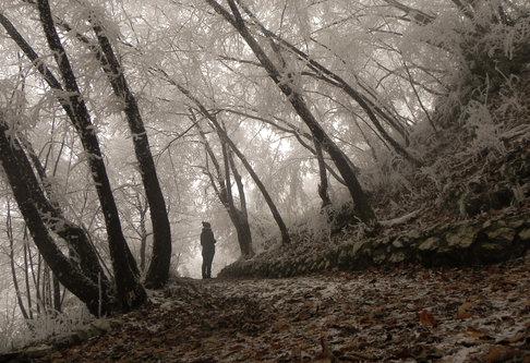 Raneberg Šuma sjećanja