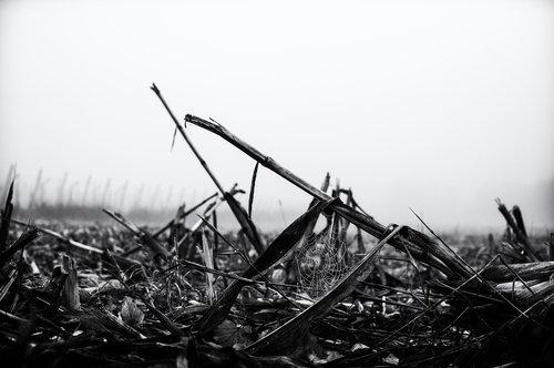 Rankoni Kukuruzi u magli 2