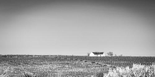 Salex Vinograd