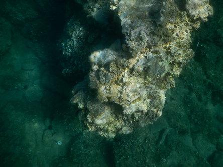 SeaWolf Podvodna fotografija.JPG