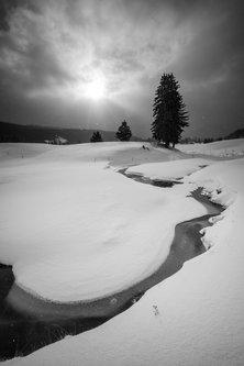 Shljivo Zima