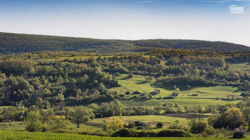 Shume Zelena Panorama