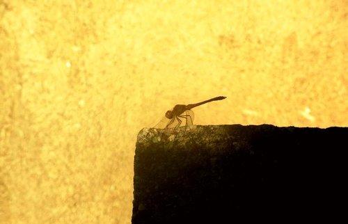Sima33 Insekt