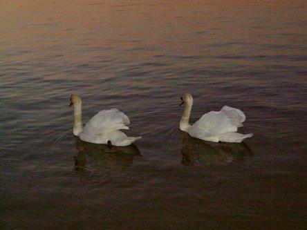 Sima33 Labudovo jezero
