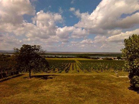 Sima33 Vinograd pored Dunava