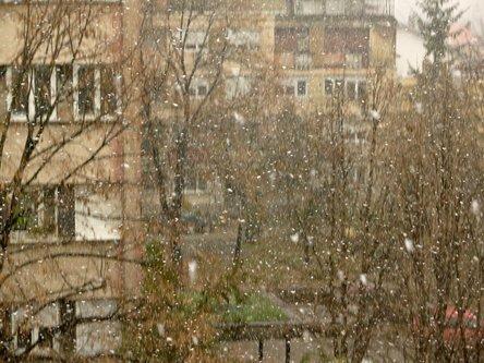 Sima33 Pada prvi sneg ...