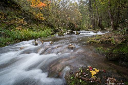 Sokodrag Moravica - jesenji aranžman