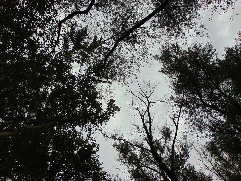 Nad šumom