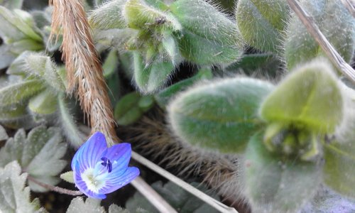 Sovijaticar Hello Spring