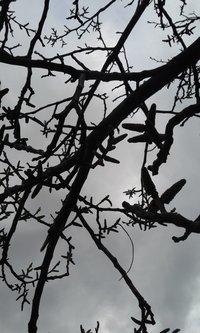 Sovijaticar Rainy day