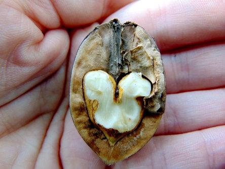Sovijaticar Srce