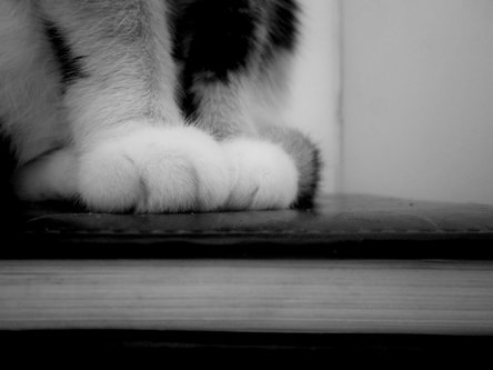Stalker Catpaws