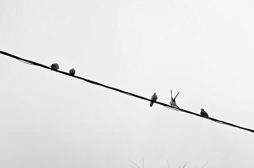 Stefanphoto Ptice