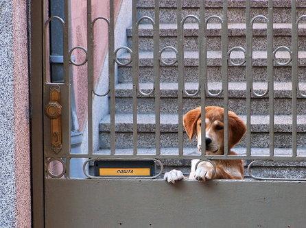 Steva Čekajući poštara
