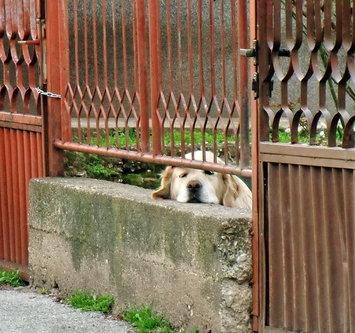 Steva Dremka na ogradi