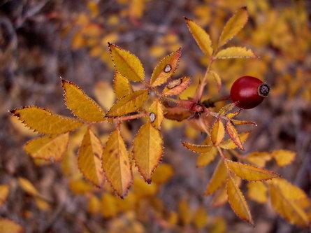 Steva Jesenje boje u januaru