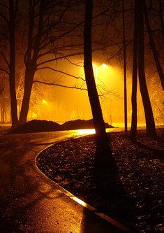 Steva Noć u parku