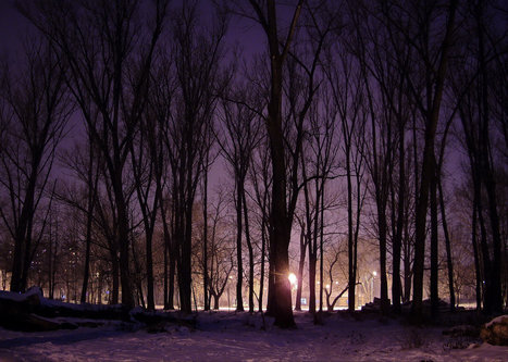 Steva Zimska noć