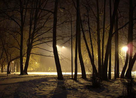 Steva Zimska noć u parku
