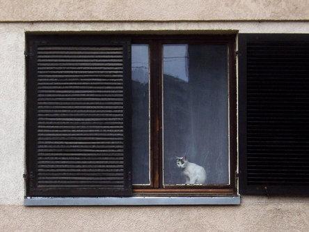 Steva Pogled sa prozora
