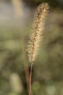 Svetlana 2014 svetlana makro trava