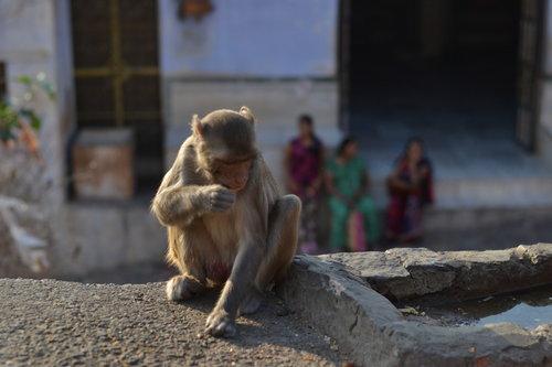 Tamara Majmunska posla