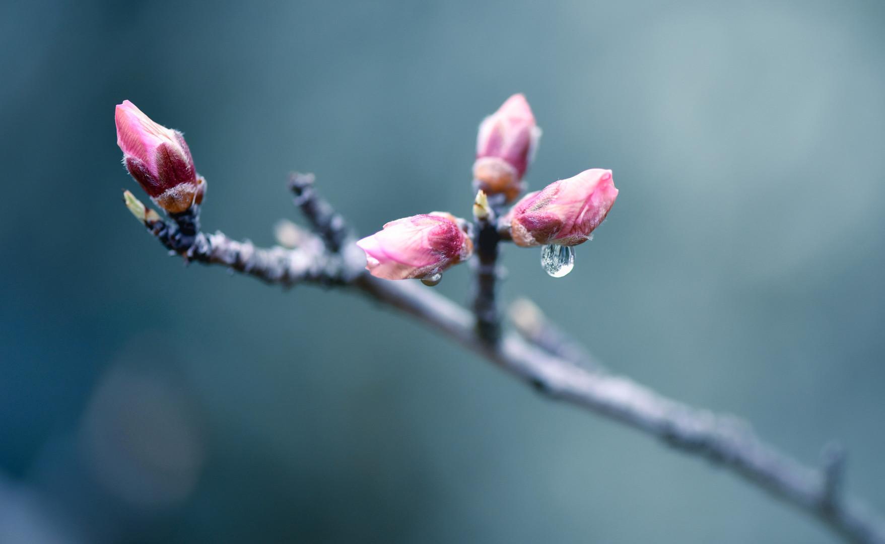Voćka poslije kiše
