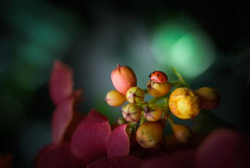 Tanja Colors of nature