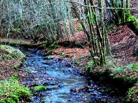 Taxan Nebesko plava rijeka