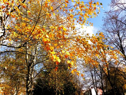 Taxan Zlatna jesen