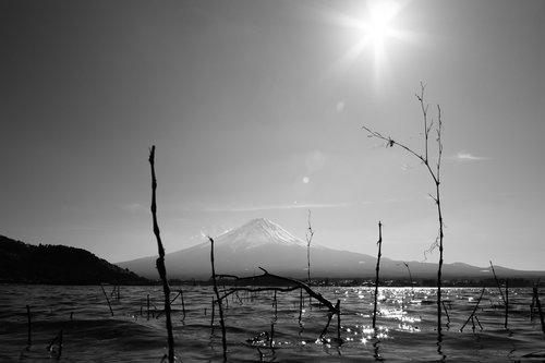 Thalabai Fuji