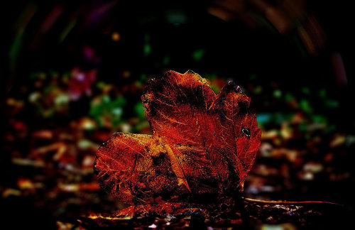 TheLadyD Jesenje sazrevanje letnjih strasti