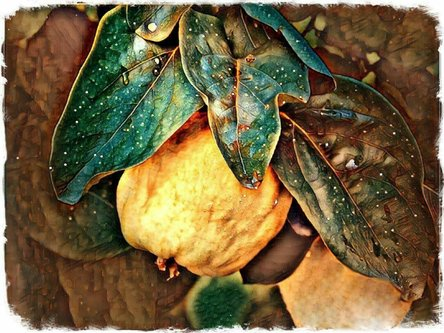 TheLadyD Jesenji testanent