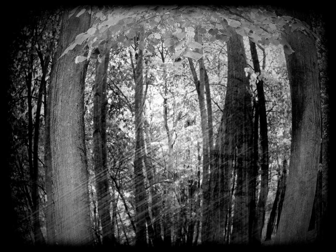 Šumski prozor