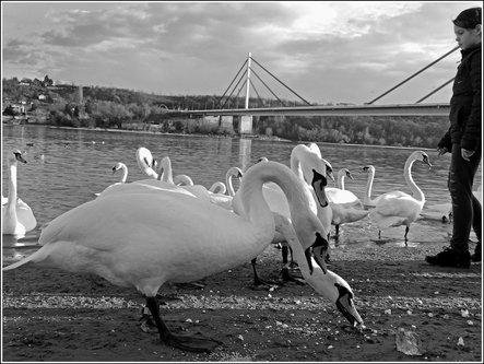 TheLadyD Kadrovi sa Dunava